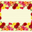 Roses. colorful flowers frame — Foto de Stock