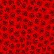 Many red roses. flower field — Stockfoto