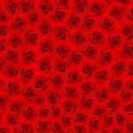 molte rose rosse. Campo di fiori — Foto Stock