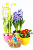 Colorful easter composition — Stock Photo