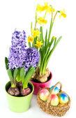 Uova di Pasqua con fiori di primavera — Foto Stock