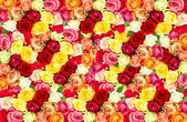 Roses. colorful flowers frame — Stock Photo