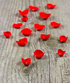 Petals of red rose over wooden background — Stock Photo