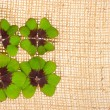Fresh green clover leaves on burlap — Stock Photo
