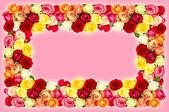 什锦的玫瑰。七彩花朵帧 — 图库照片