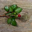 Bud of dark red rose with green leaves over wooden background — Stock Photo #13510546