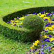 Stock Photo: Colorful flower bed. violas