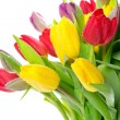 Colorful bouquet of fresh spring tulip flowers — Stock Photo