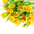 Fresh yellow tulips on white background — Stock Photo
