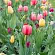 Assorted colorful tulips on flowerbed — Stock Photo #13511386