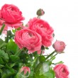 Stock Photo: Beautiful bouquet of spring flowers pink ranunculus