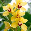 Exotic orchid flower with green tropical plants — Stockfoto