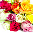 Colorful roses, beautiful flower bouquet on white background — Stock Photo