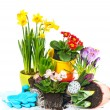 Spring flowers narcissus, crocus, tulip, hyacinth and primula — Stock Photo