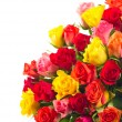 Colorful assorted roses on white background — Stock Photo