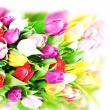 Colorful fresh spring tulips flowers on white — Stockfoto