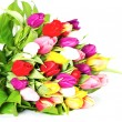 Colorful fresh tulip flowers — Stock Photo