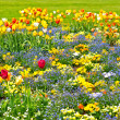 Colorful tulips on flowerbed. outdoors garden — Stock Photo #13518050