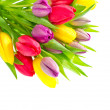 Colorful bouquet of fresh spring tulip flowers with water drops — Stock fotografie