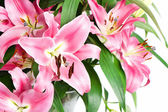 Bouquet of beautiful lily flowers — Stock Photo