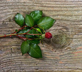 Bud of dark red rose with green leaves over wooden background — Stock Photo