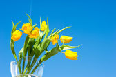 Yellow spring tulips over blue sky — Stock Photo