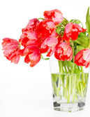 Beautiful red tulips in a glass vase — Stock Photo