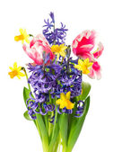 Tulips, narcissus and hyacinth. spring flowers — Stock Photo