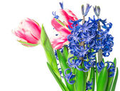 Tulips and hyacinth over white background — Stock Photo