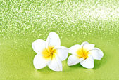 Frangipani spa flowers on green background — Stok fotoğraf
