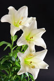 White lily flowers bouquet on black — 图库照片