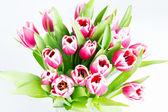Pink tulip flowers — Stock Photo