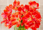 Red tulip flowers in a vase — Stock Photo