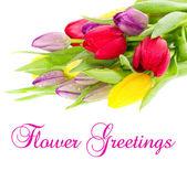 用水的新鲜春季郁金香多彩花束滴眼液 — 图库照片