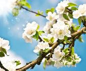 Bloeiende appelboom met witte bloemen over blauwe zonnige hemel — Stockfoto