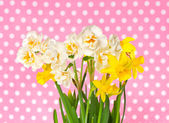 Fresh spring white and yellow narcissus flowers — Stock Photo