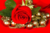 Beautiful rose on red background — Stockfoto