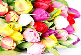 Colorful fresh spring tulips flowers — Stock Photo