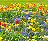 Colorful tulips on flowerbed. outdoors garden — Stock Photo