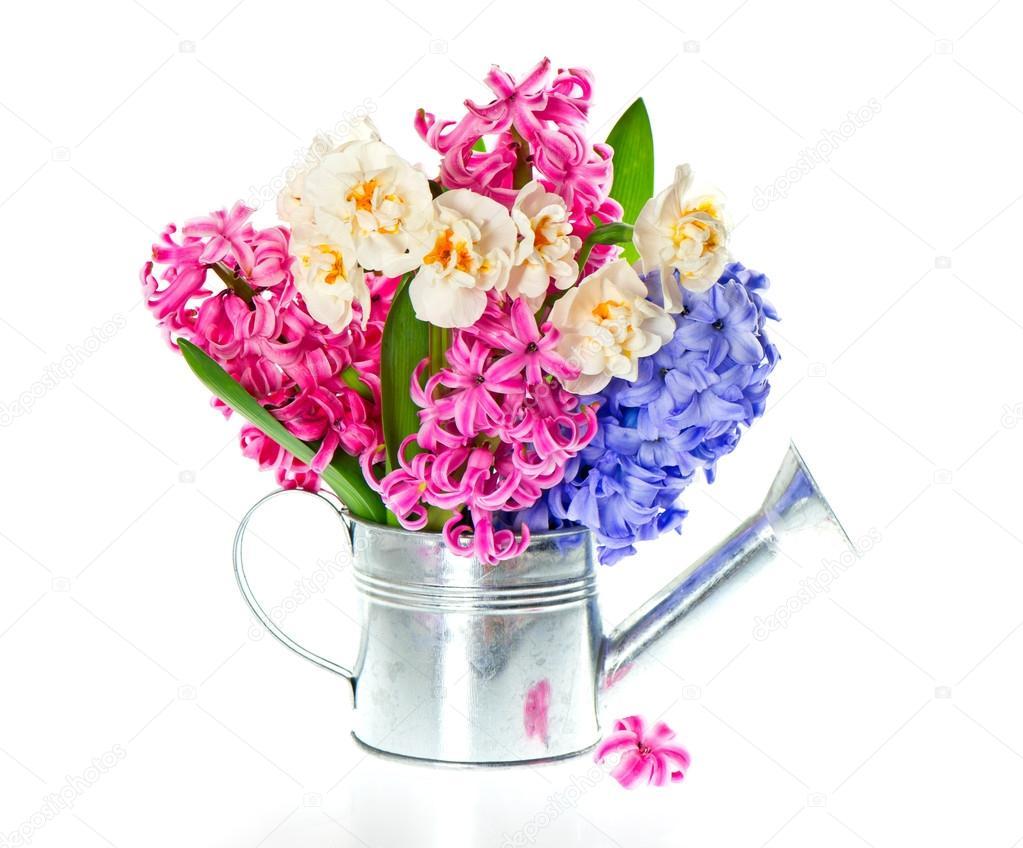 fleurs de printemps en arrosoir photo 13513186. Black Bedroom Furniture Sets. Home Design Ideas