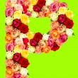 P, roses flower alphabet — Stock Photo