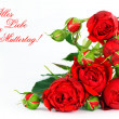 Beautiful red roses on a white background — Stock Photo