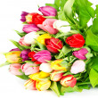 Colorful fresh spring tulips flowers on white - Stock Photo