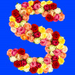 S, roses flower alphabet — Stock Photo