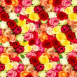 Assorted roses. colorful flower field — Stockfoto