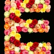 E, roses flower alphabet — Stock Photo