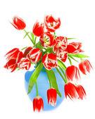 красный тюльпан цветы на белом — Стоковое фото