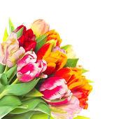 букет свежих красочных тюльпан цветы — Стоковое фото