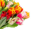 Bouquet of fresh spring tulips over white — Stock Photo
