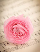 Soft pink ranunculus flowers over book page — Stock Photo